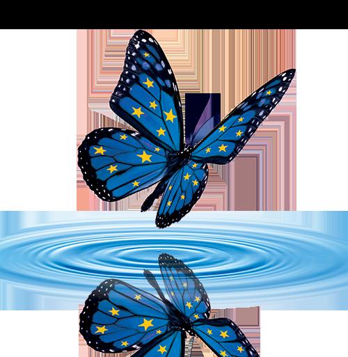 papillon_sans_fond_500.png